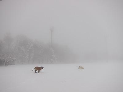 今シーズン初の雪遊び_e0192217_10523790.jpg