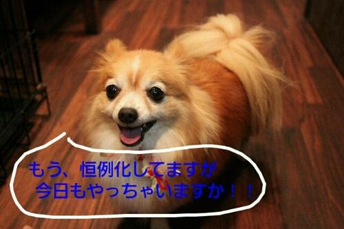 b0130018_834206.jpg