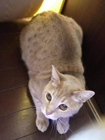 猫のお友だち シナモンちゃんプーちゃんとのくん編。_a0143140_23413273.jpg
