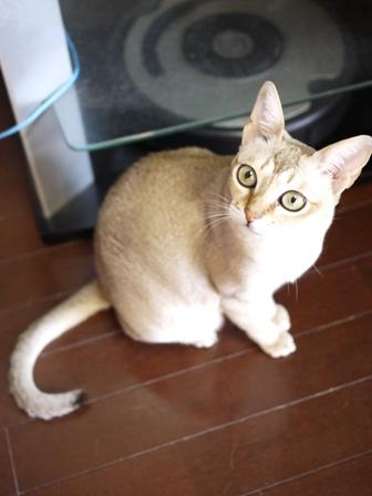 猫のお友だち シナモンちゃんプーちゃんとのくん編。_a0143140_23413632.jpg