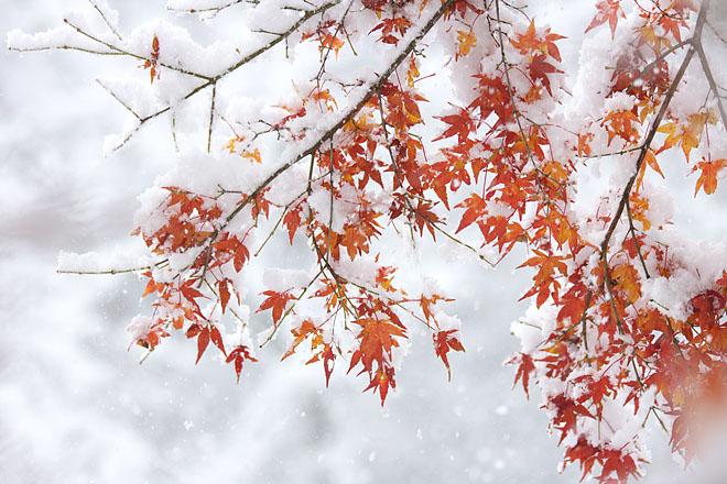 雪紅葉 2_c0067040_1232163.jpg