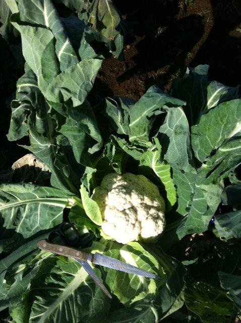 今日の気温あれば 野菜達は、すくすく育ちます_c0222448_1254812.jpg