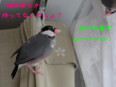 b0158061_2126376.jpg