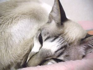 眠い_a0001971_1513291.jpg