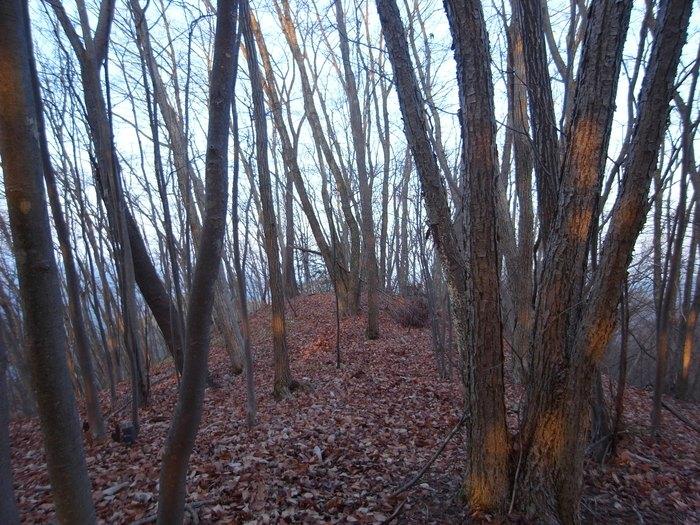 2012.12.23 笹尾根を大きなバックパックで歩く_b0219778_23292541.jpg