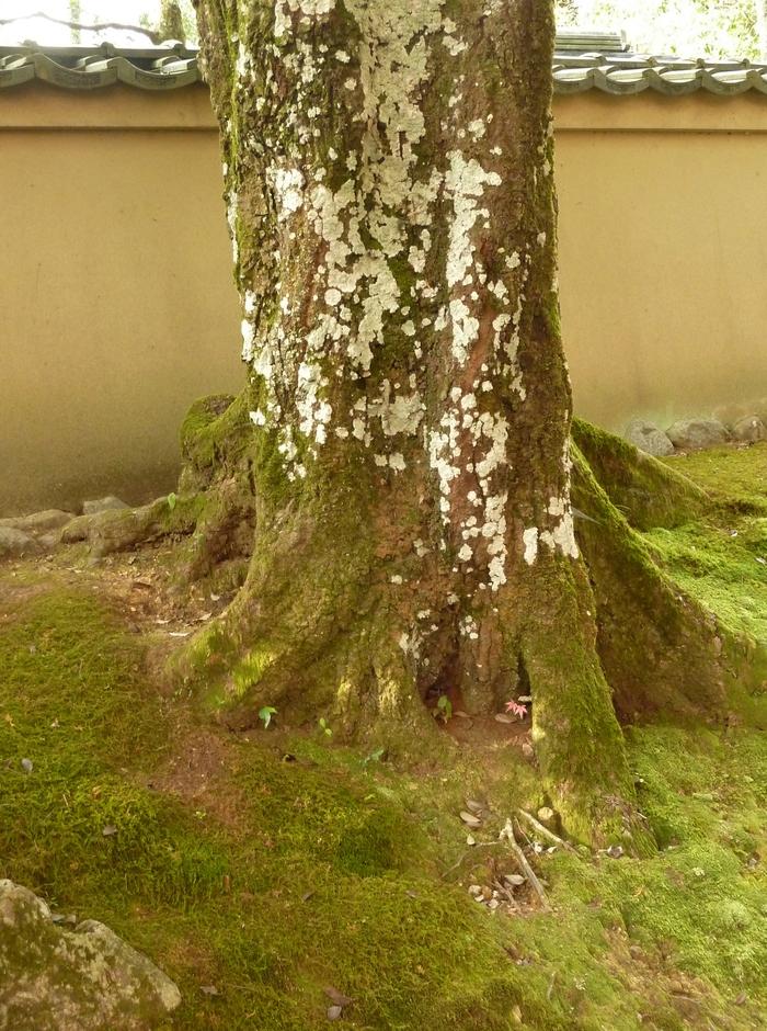 晩秋の京都 31_b0093088_1052588.jpg