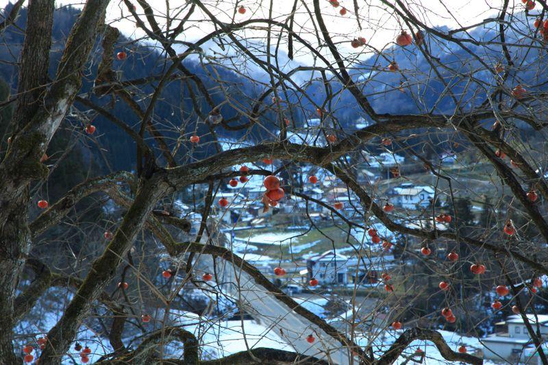 残り柿と青木湖の夕景_d0148902_2031587.jpg