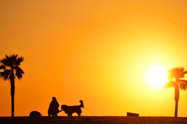 ワンコと夕陽のシルエット_d0116804_13525058.jpg
