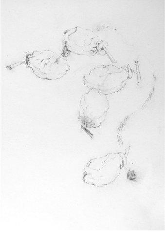 高野カヨ 素描展 2013.1.11~1.28_b0237338_103026.jpg