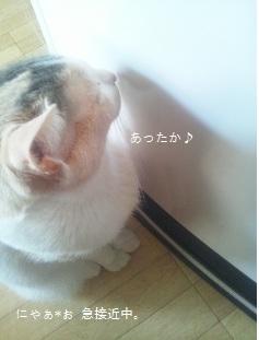 冬休み ① *_c0131839_14134799.jpg