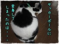b0151748_22582432.jpg