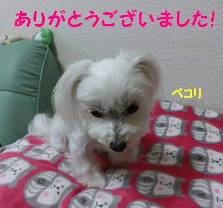 b0193480_1039132.jpg
