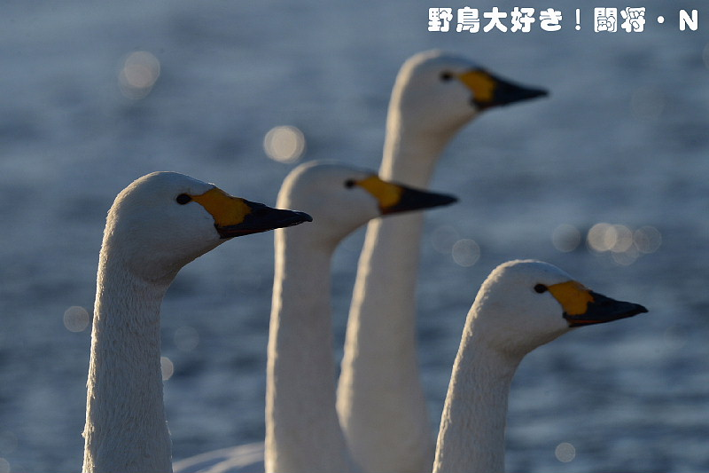 f0059882_1819144.jpg
