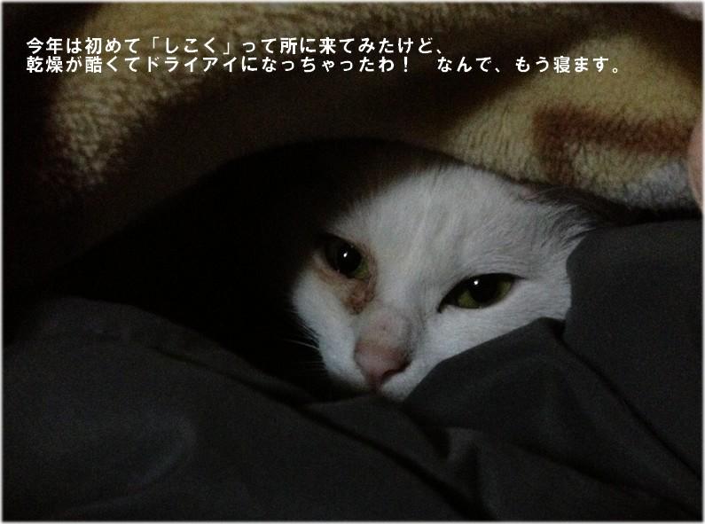 f0223329_23165737.jpg