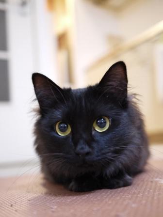 猫のお友だち クロちゃん編。_a0143140_2357449.jpg