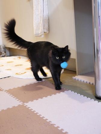 猫のお友だち クロちゃん編。_a0143140_23574748.jpg