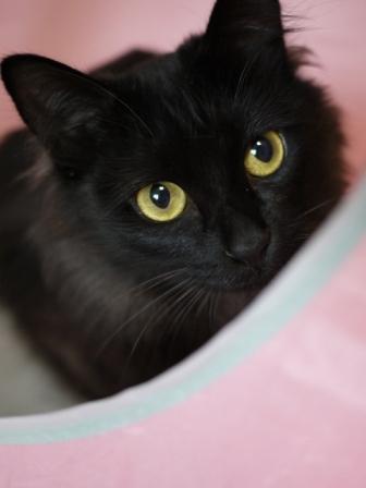 猫のお友だち クロちゃん編。_a0143140_2357724.jpg