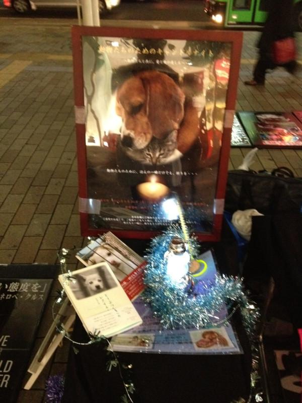 動物たちのためのキャンドルナイト2012@三ノ宮_b0198356_221968.jpg