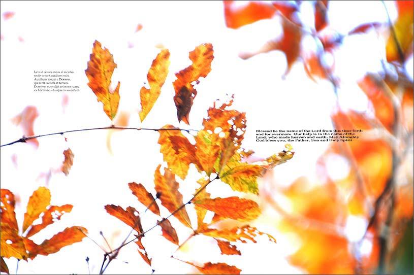 f0198771_014593.jpg