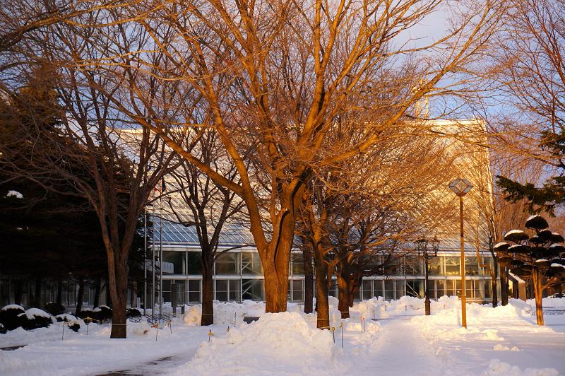 夕日の射す 文化公園_a0160581_8395353.jpg
