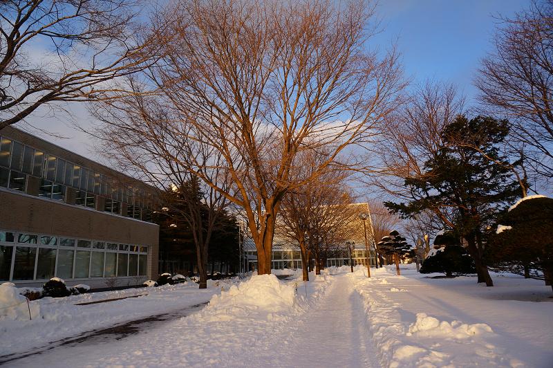夕日の射す 文化公園_a0160581_8401764.jpg