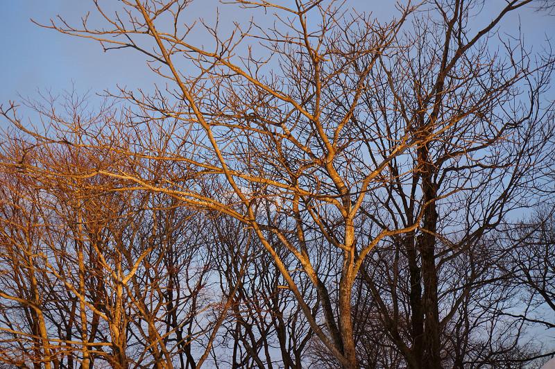 夕日の射す 文化公園_a0160581_8402873.jpg