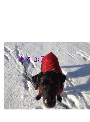 初雪遊び_e0244283_0231479.jpg