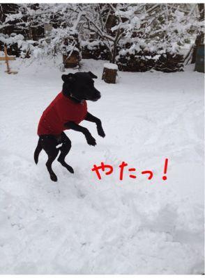 初雪遊び_e0244283_0231684.jpg