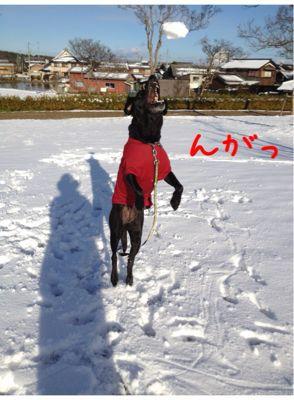 初雪遊び_e0244283_0233874.jpg