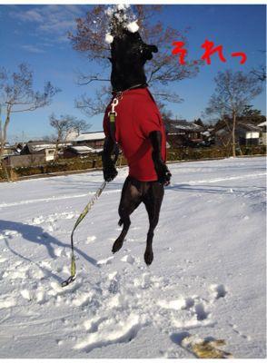 初雪遊び_e0244283_0234142.jpg