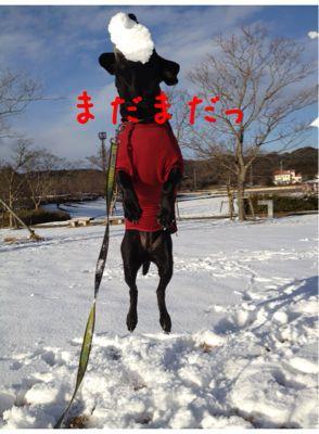 初雪遊び_e0244283_0234699.jpg