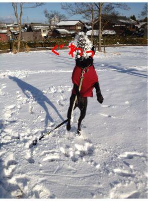 初雪遊び_e0244283_0234991.jpg