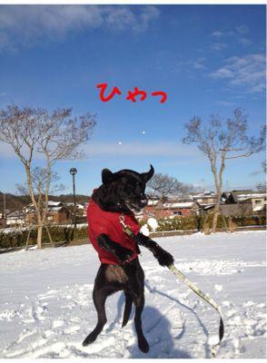 初雪遊び_e0244283_0261929.jpg