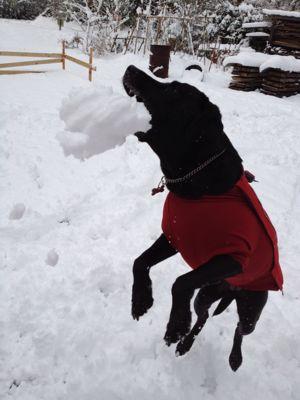 初雪遊び_e0244283_0262367.jpg