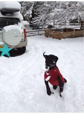 初雪遊び_e0244283_0262553.jpg