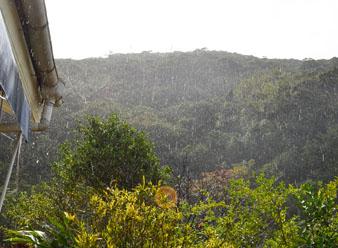 恵みの雨♪_e0028387_13122897.jpg