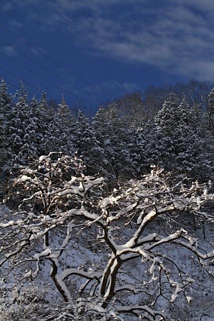 冬便り_d0088788_21401489.jpg