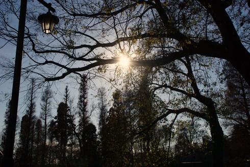 謹賀新年。今年も宜しくお願いします。弁天堂~井泉亭の月見&天麩羅うどんと田舎しるこ~稲荷様@井の頭公園_f0006713_1517052.jpg
