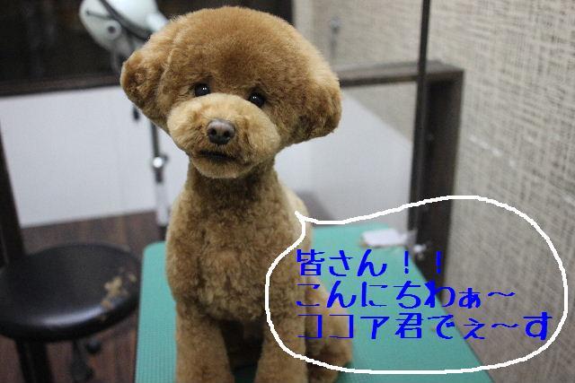 b0130018_12221211.jpg