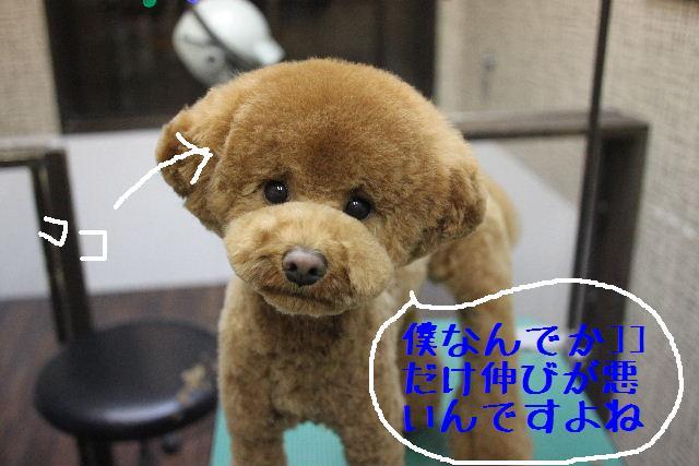 b0130018_12221897.jpg