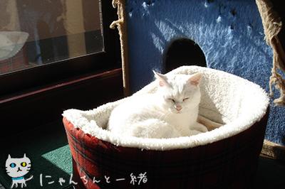 にゃんちんの2012年最終日_e0031853_0315882.jpg