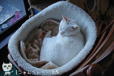 にゃんちんの2012年最終日_e0031853_0323454.jpg