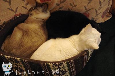 にゃんちんの2012年最終日_e0031853_0324969.jpg