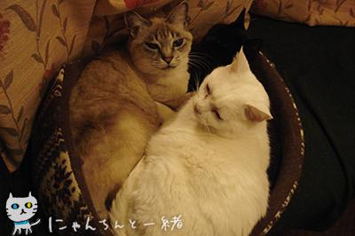にゃんちんの2012年最終日_e0031853_0331592.jpg