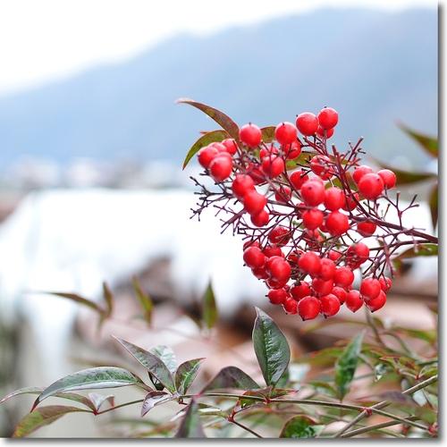 山郷の正月(あけましておめでとうございます)_f0099102_22344252.jpg