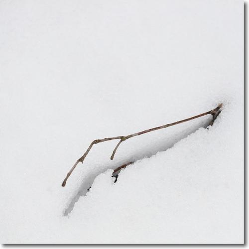 山郷の正月(あけましておめでとうございます)_f0099102_2235652.jpg
