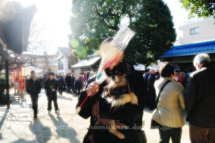 おせち料理と神社参詣_a0229217_1123144.jpg