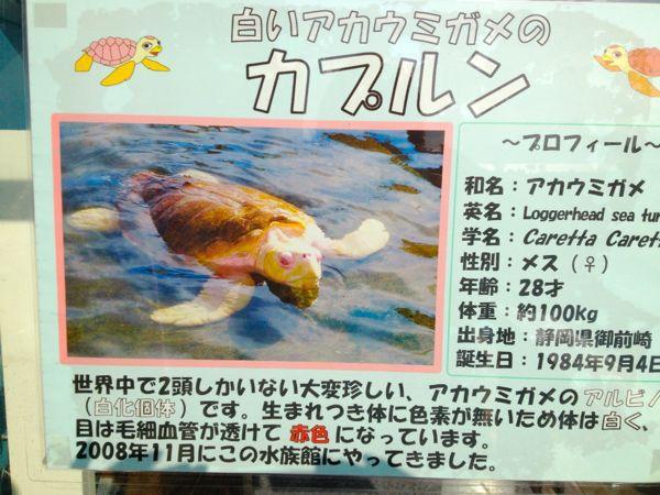 和歌山へGO!パート2_e0292546_23295430.jpg