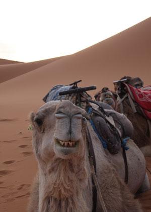 モロッコの旅 part4 (砂漠)_d0103248_1344013.jpg