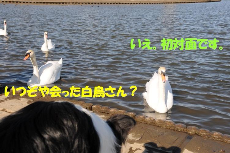 c0147241_19443387.jpg
